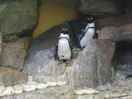 penguins! , Elaine M - October 2013