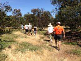 The group I am in are walking thru the wildlife with our tour guide to find the next kangaroo! , Stephanie - December 2013