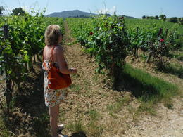 Dawn checking out the vineyard. There's a rose bush at the end of every row, it's an early warning system for bugs. They'll start doing damage to the rose bush before the vines. , Shawn S - July 2014