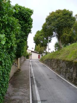 Tree lined road to hilltop town of Asolo., Kenton W - July 2008