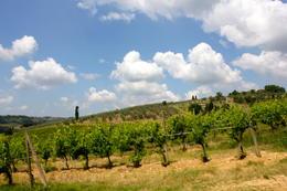 View of the Chianti Region , Lidia - July 2011