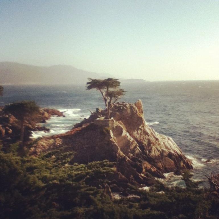Lone Cyprus - San Francisco
