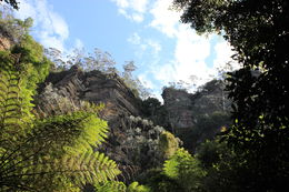 The view from the bottom of the Scenic World site, nice boardwalk and, like, literally vertical railway! , Stanislas T - November 2015