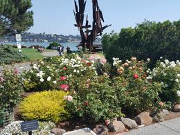 A beautiful park in Sausalito , Shelley S - December 2017