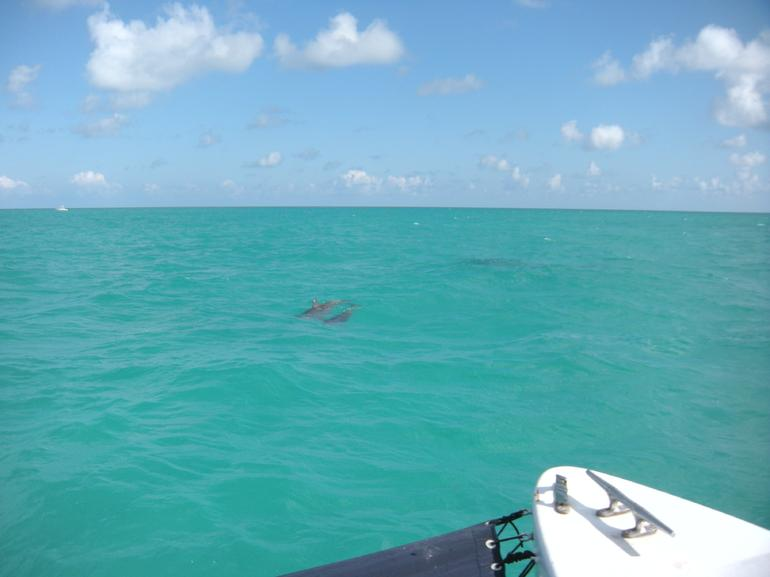 Dolphins Playing - Key West