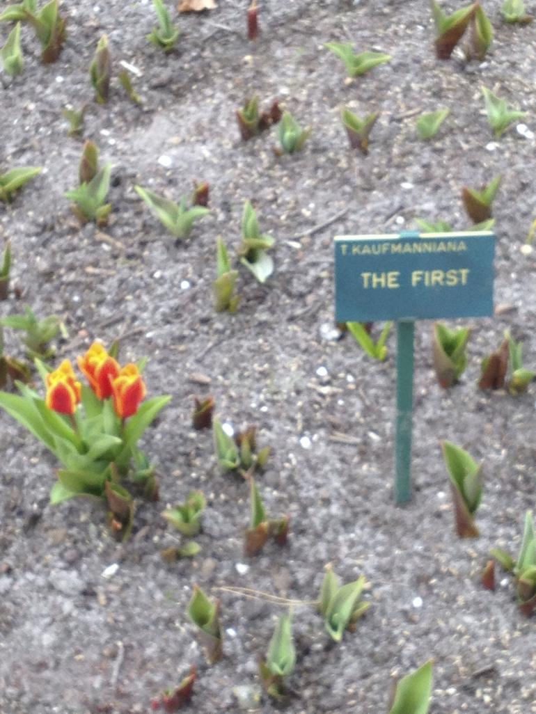 flower - Amsterdam