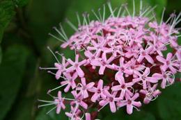 Pretty flowers along Mount Emei - June 2012