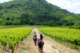 Riding through the vines. , Lidia - July 2011
