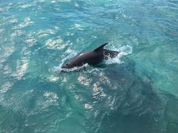 Dolphins , Sajani - November 2016