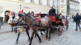 There are lots of these horse drawn city tours too. , John B - January 2017