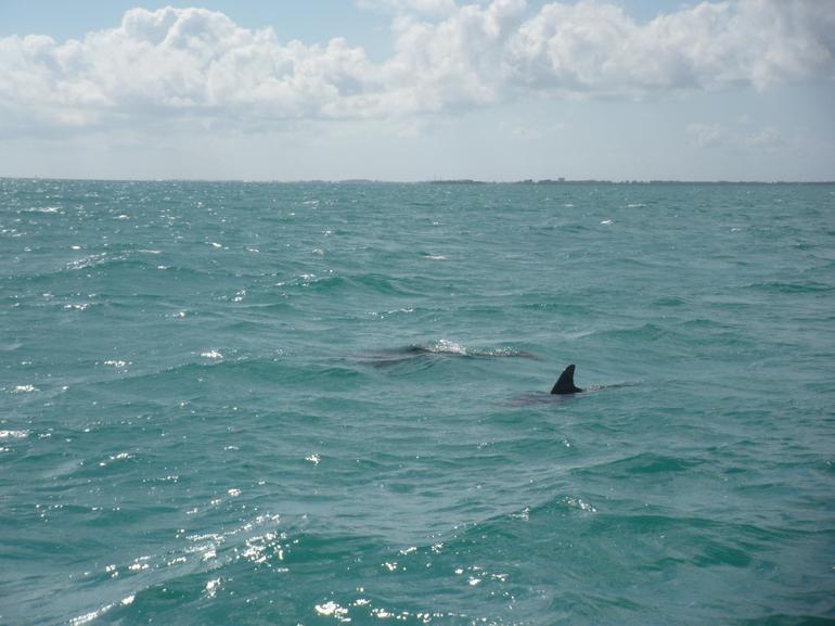 Dolphins - Key West