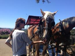 Feeding the horses of the wine carriage before heading through the vineyards!, Katiemo - August 2013
