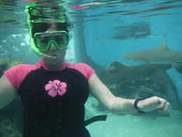 i'm in the photo with 2 sharks surrounding me. great experience- i would have stayed there more ! , lea m - October 2013