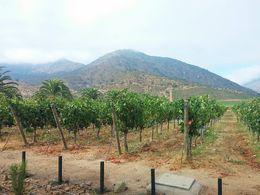 Monte Verde Vineyard , Joanna F - March 2015