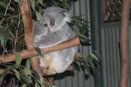 Featherdale wildlife park. , Margaret G - August 2014
