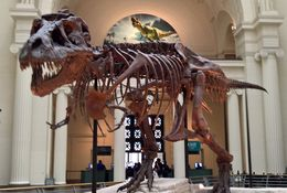 Great to be able to see Sue at the Field Museum and see the story of her discovery. , Janet D - June 2016