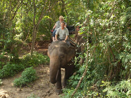 Dave didn't do a bad job negotiating the foliage (although I suspect the elelphant knew where to go)! , Jill - November 2011