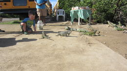 Feeding the iguanas , knwynkoop - December 2015