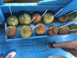 refreshing coconuts await us for our boat ride home , Danielle W - March 2017