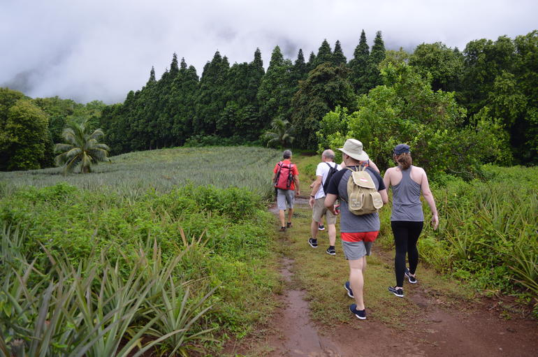 Moorea Three Coconuts Trail Guided Hike photo 8