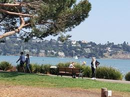 More Sausalito , Shelley S - December 2017
