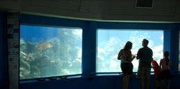 This was a large tank in the round with loads of different sealife - August 2011