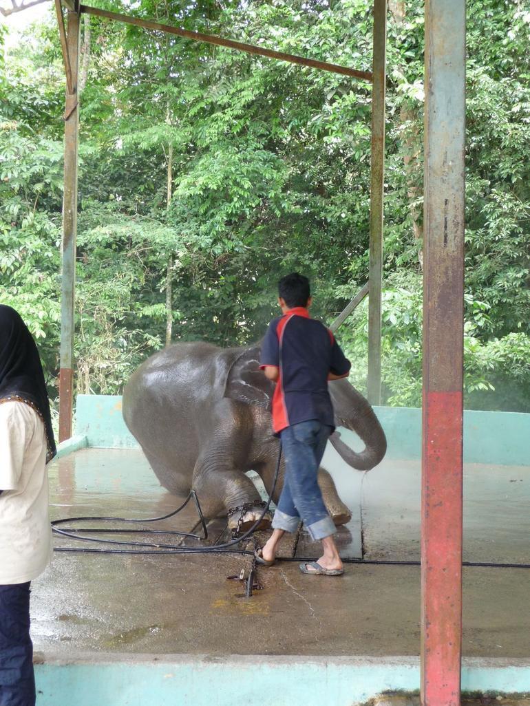 Elephant getting a hose down - Kuala Lumpur