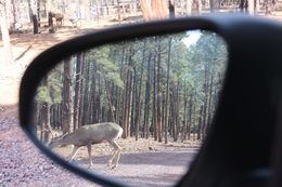 Objects in mirror are closer than they appear!, Bandit - October 2015