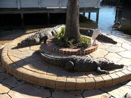 Gatorland: Resting under the sun - February 2009