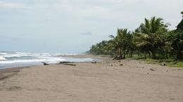 Tortuguero beach where the turtles come in the night time. , Bipin K - August 2016