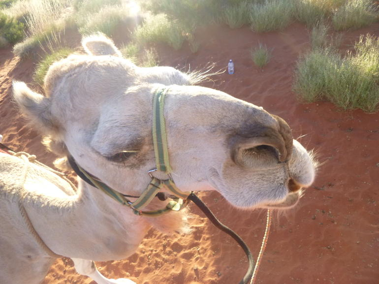Uluru Camel Express, Sunrise or Sunset Tours photo 14