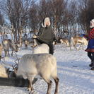 Reindeer Sledding Experience and Sami Culture Tour from Tromso, Tromso, NORUEGA