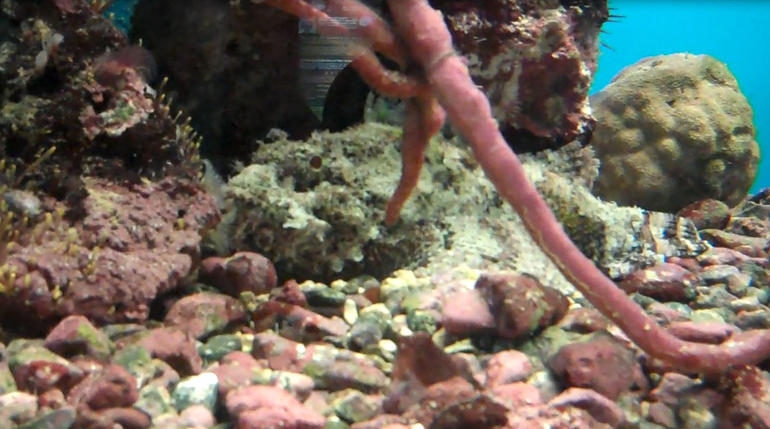 Can you see the fish in this photo? - St Thomas