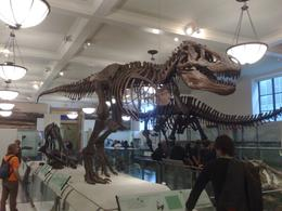 Great dino exhibit at American Museum of Natural History, Igor J - September 2009