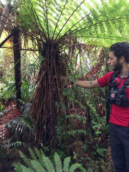 toujours notre guide nous montrant une grande fougère , Ghislaine R - May 2014