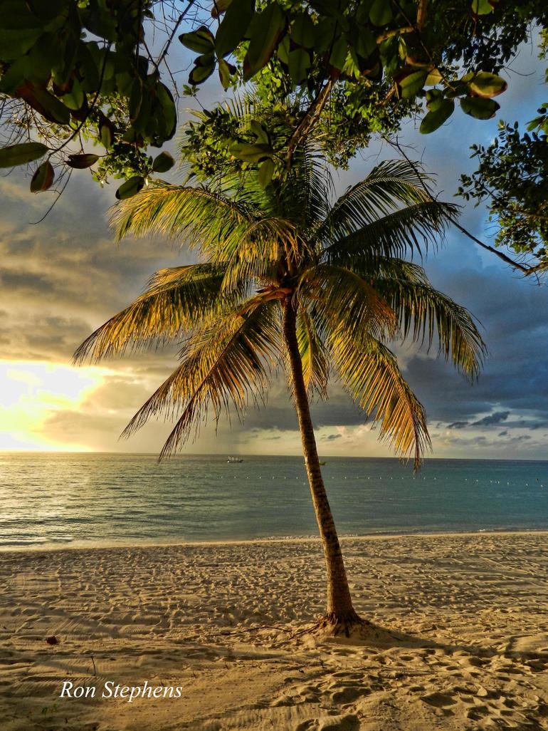 Palm at Sunset - Montego Bay