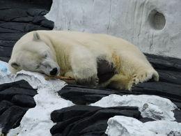 Polar Bear , Helen S - May 2016
