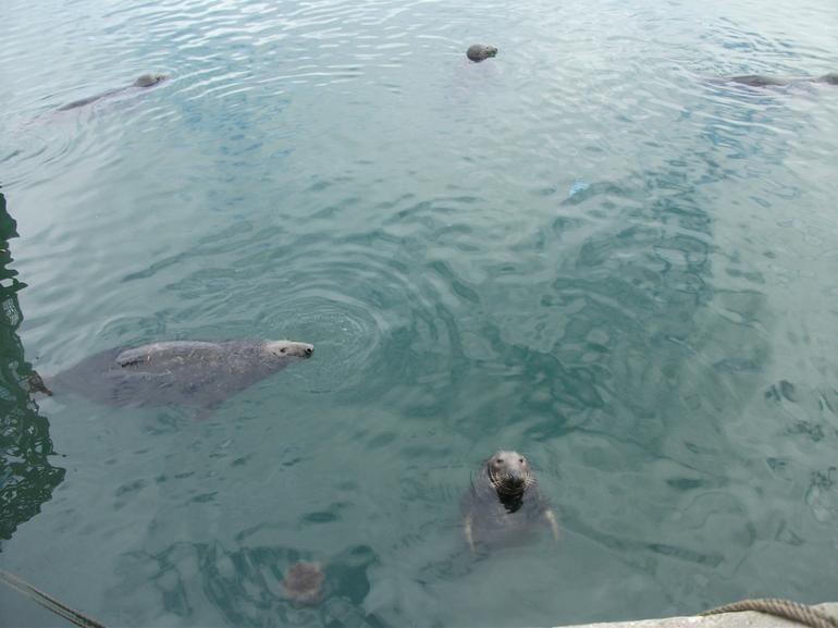 Seals at Howth - Dublin