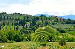 The vineyards of Tuscany. , Kizzie C - August 2014
