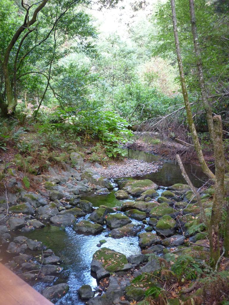 Brook in the Muir Woods - San Francisco