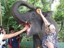 Feeding the elephants at the sanctuary. Make sure you keep the fruit high so they can see it. - December 2008