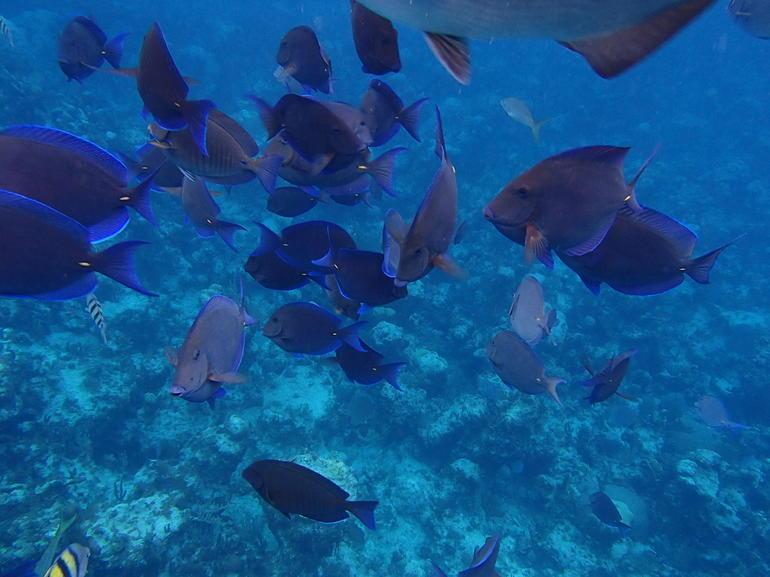 Pretty fish! - Nassau
