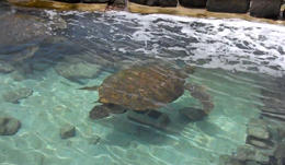 There are two in this tank, both have been rehabilitated - August 2011