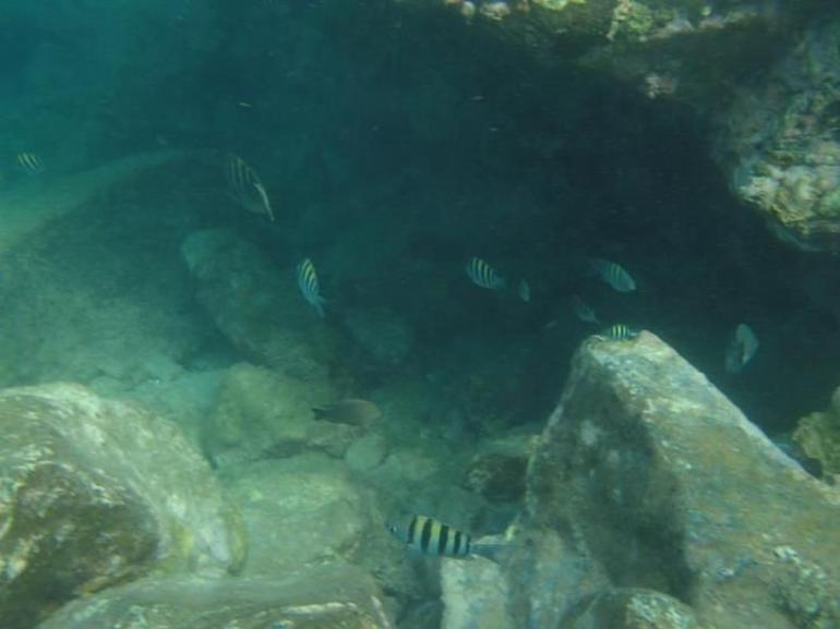 snorkeling in the natrual pool - Aruba