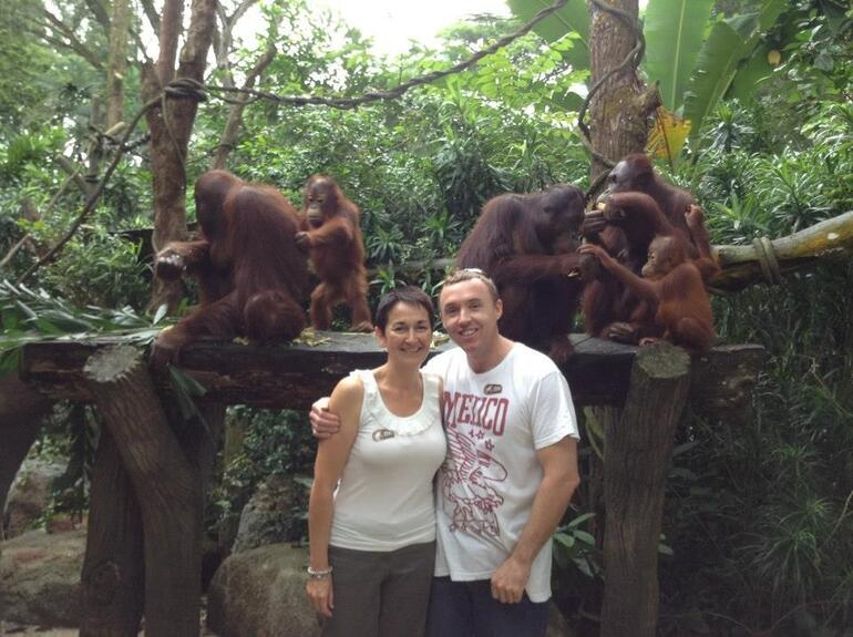 The wonderful Orangutans - Singapore