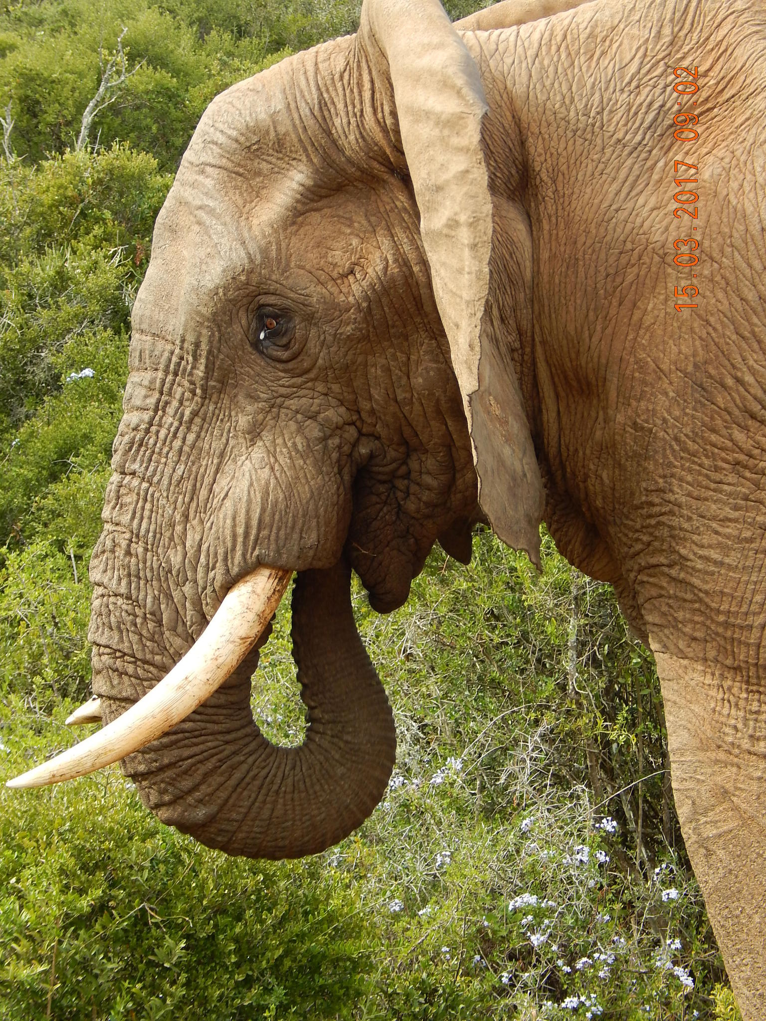 MORE PHOTOS, 5-Day Garden Route with Addo National Park Small Group Tour from Cape Town