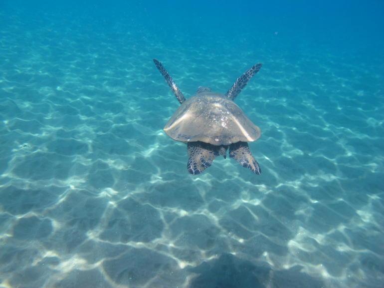 04-11-2012 Riveong 062 - Maui