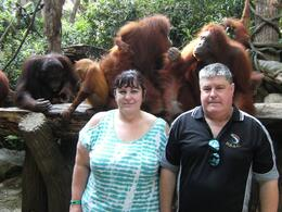 Standing in front of the orangutans to have our photo taken, the one behind Mike was actually poking his shoulder and giving him a scratch. , Sue R - September 2013