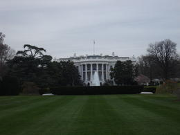 The White House, Cat - January 2012