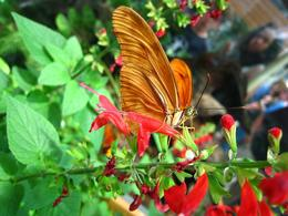 Colorful flowers attract unusual butterflies. - November 2009